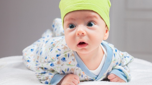 bebek