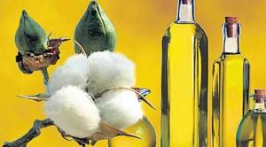 3.5 liralık pamuk yağı halka 'zeytinyağı' diye satılıyor