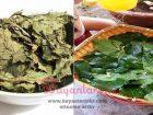 Dut yaprağı çayı nasıl yapılır dut yaprağının faydası