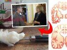 Hindistan cevizi yağı ile alzheimer tedavisi nasıl yapılır