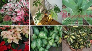 Evde bulundurulmaması gereken bitkiler nelerdir