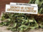 Stresin doğal ilacı Melisa otu