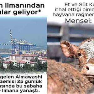 Yurt dışından gelen etler Türkiye menşeili mi gösteriliyor?