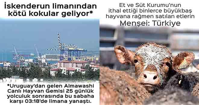 Yurt dışından gelen etler Türkiye menşeili