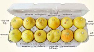Limonla göğüs kanseri testi nasıl yapılır?