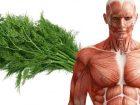 1 Hafta Boyunca Dereotu Tüketin, Vücudunuzdaki Değişimi Görün