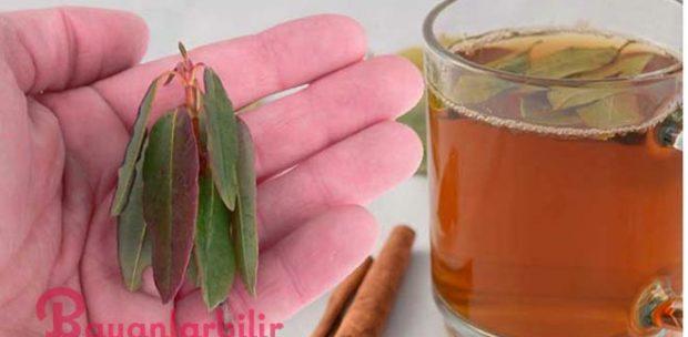 Kilo Vermek için Defne Yaprağı ve Tarçın Çayı
