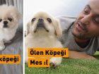 Ersin Korkut'un yeni köpeği? Ersin Korkut ölen köpeği Mes'in yerine yeni köpek aldı