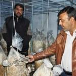 Manisa'nın Turgutlu ilçesinde kapatılan 100 metrekarelik besi çiftliğinde istiridye mantarı üretmeye başlayan üç girişimci, kısa sürede 3 bin metrekarelik bir tesiste üretim yapar hale geldi.