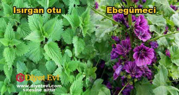 EBEGÜMECİ: Doğada kendiliğinden yetişebilen, mor renkli çiçekleri olan ebegümeci'nin yaprakları faydalı bir sebze olarak yemek ve salatalarda, çiçekleri ise ilaç ve alternatif tıp karışımlarında kullanılır. Kurutulmuş yapraklarının aktarlarda satışı yapılmaktadır. Çayının hazır paketlerde satışı yapılmaktadır. ISIRGAN OTU: Doğada kendi kendine yetişen, kökünden yapraklarına kadar, tohumları dahi çok şifalı olan bir bitkidir. En şifalı bitkiler arasında gösterilir. Eski çağlardan günümüze kadar sağlık alanında çok büyük bir öneme sahiptir. İlaç sanayi ve kozmetik firmaları tarafından da sürekli kullanılır. Ebegümeci ve ısırgan otu kürü akciğer kanserine yeni yakalanmış kişiler için oldukça etkili bir kür. Bu kür sayesinde hastalığı tamamen ortadan kaldırmak da mümkün.. Gerekli malzemeler ve tarif için görsele tıklayın ve 3. fotoğrafa geçin.