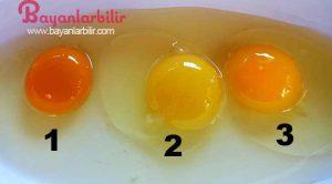 Sağlıklı tavuğun yumurtası ne renk olur