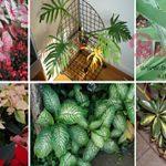 zehirli bitkiler devamı için görsele tıklayın ve sonrakine geçin.