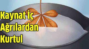 İbrahim Saraçoğlu Çınar Yaprağı Kireçlenme Kürü